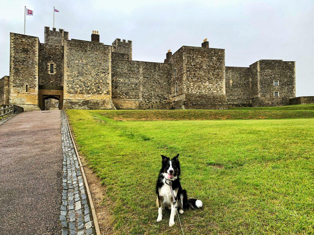 Cadet Kai, border collie, posing infront of Dover Castle